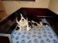 Pups Starling1